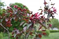 pavasaris Kaltenē